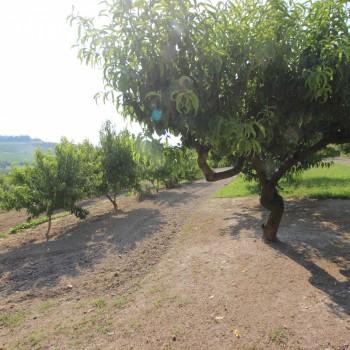 VENDESI TERRENO AGRICOLO - Foto 8